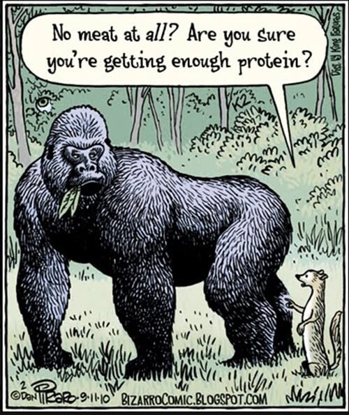 gorilla-image-from-peta-s