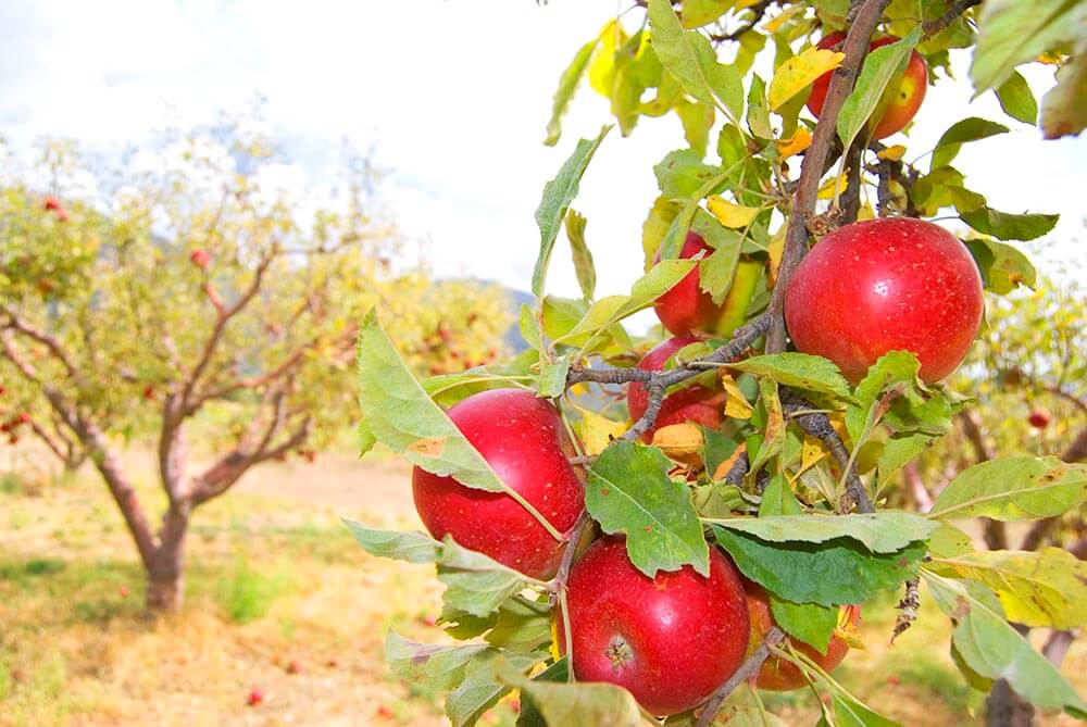 Replacing crop fields with orchards is the way forward to protect our health and save the environment.