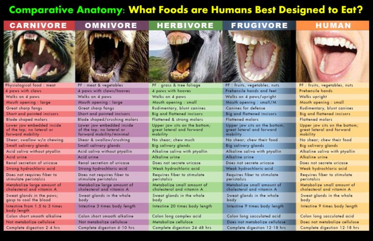 Comparative anatomy, where do HUMANS fit in?